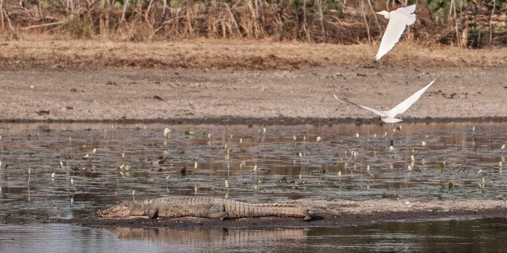Les crocodiles sacrés