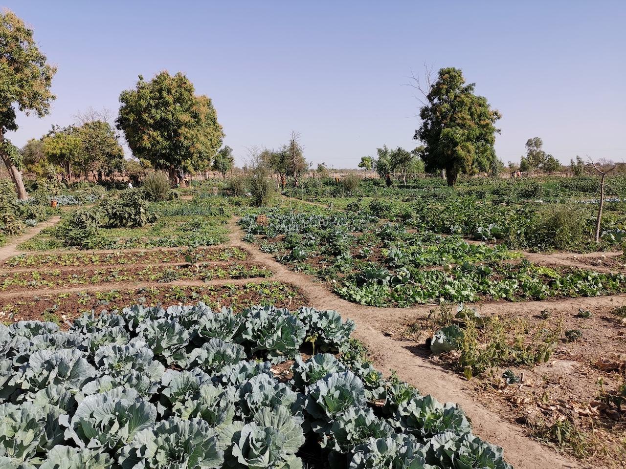 Verdure en zone sub sahélienne