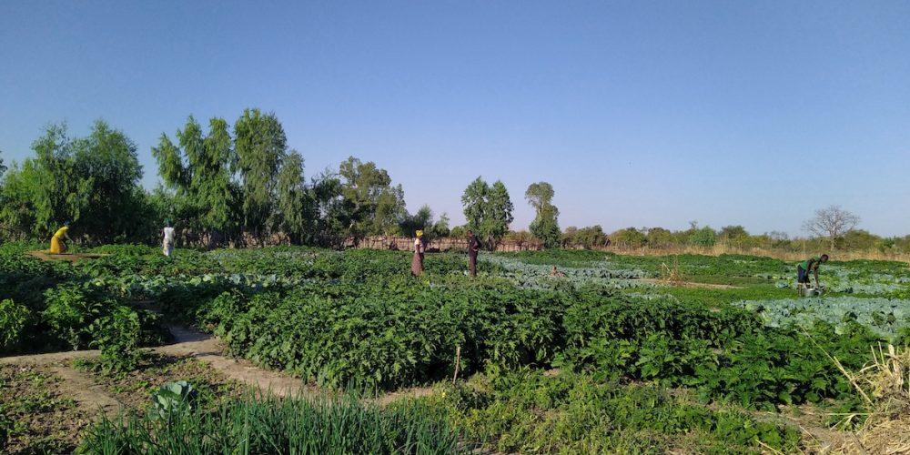 Biba Grand jardin